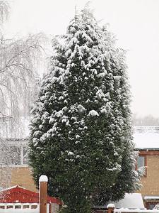Low Moor Snow 17