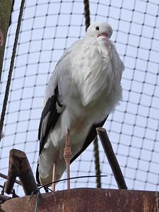 Shy Stork!