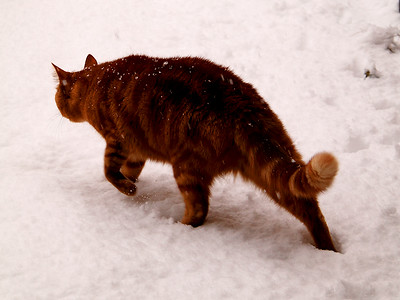 George In The Snow!