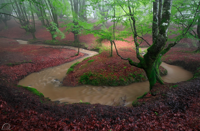 THE MEANDER