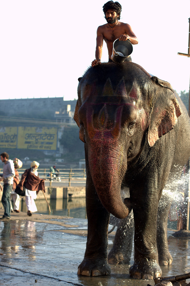 Man and his elephant in Ujjain