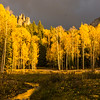 Late afternoon sun on the aspens of True Grit Meadow