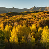 Aspen and oaks at Dallas Divide, shortly after sunrise