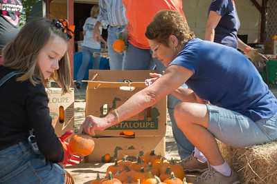 Pumpkin Patch Unloading 2014 (42 of 245)