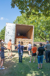 Pumpkin Patch Unloading 2014 (10 of 245)