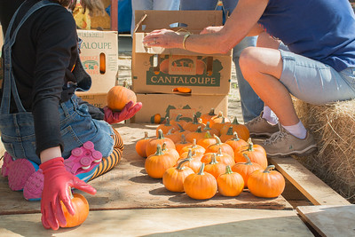 Pumpkin Patch Unloading 2014 (43 of 245)