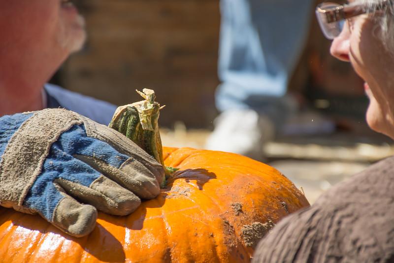 Pumpkin Patch Unloading 2014 (162 of 245)