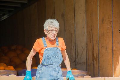 Pumpkin Patch Unloading 2014 (11 of 245)