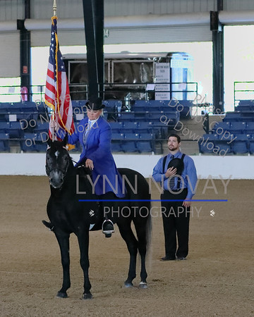 29th Rocky Mountain Horse International Grand Championship Show