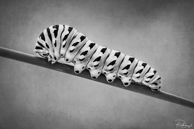 Rohrbaugh Photography B&W Image 29 - Krohn Conservatory