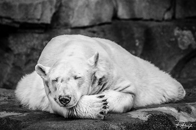 Rohrbaugh Photography B&W Image 10 - Zoo