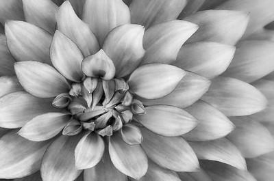 Rohrbaugh Photography B&W Image 11