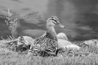 Rohrbaugh Photography B&W Image 26 - Spring Grove