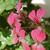 RMHS flower
