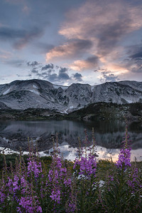 Fireweed at Lewis Lake - Medicine Bow National Forest, Wyoming - Mark Gromko - August 2013