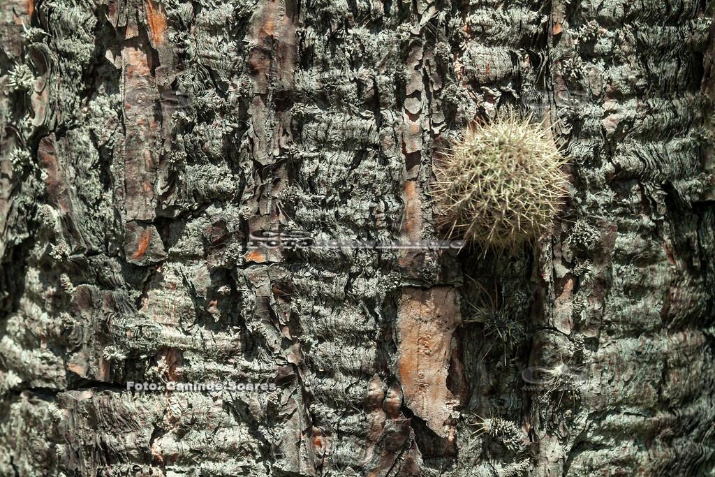 Tronco de árvore com cácto