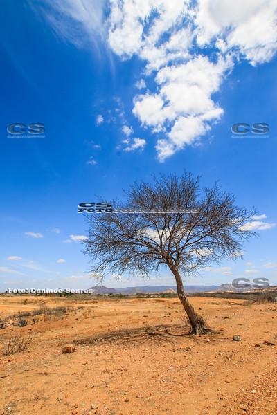Árvore Sêca