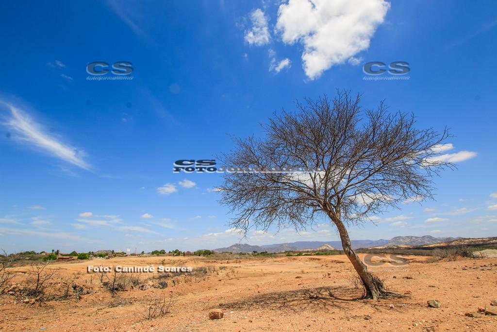 Árvore na seca