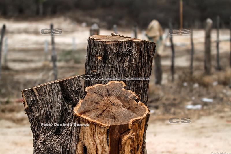Tronco de árvore cortado