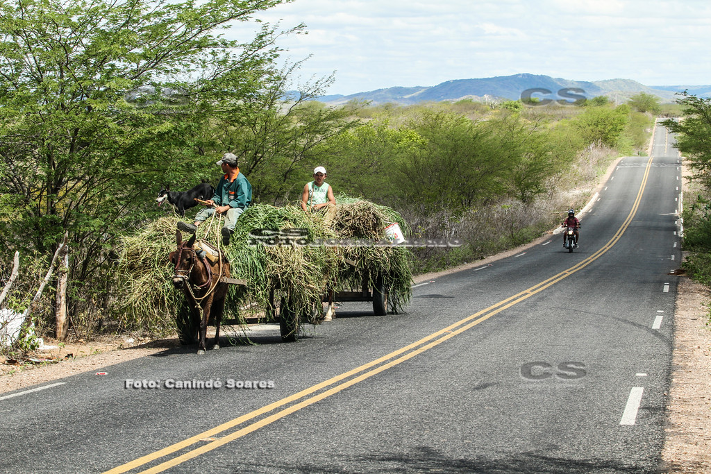 Carroça como transporte