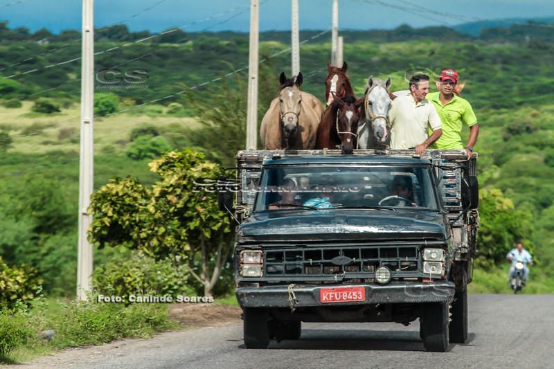Transporte de animais e gente em caminhão