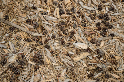 Hog fuel at the nursery includes woodchips, pine cones, and locally-grown willow stems.