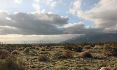 DESERT SKY 2 CROP