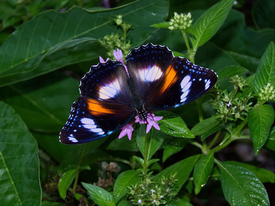 BUTTERFLY EGGFLY VARIED F_03