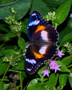 BUTTERFLY EGGFLY VARIED F_04