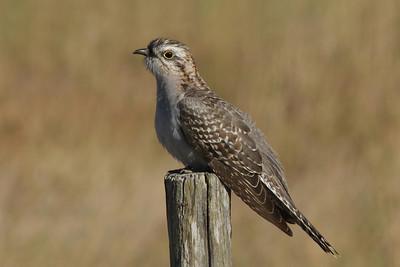 BIRDS  LARGER  R
