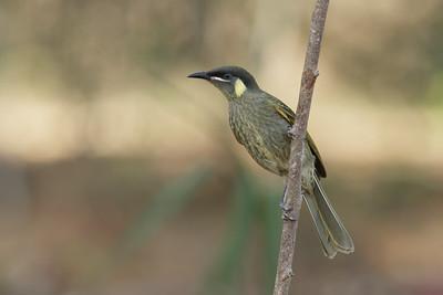 BIRDS  SMALLER  R