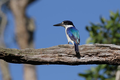 KINGFISHER FOREST_38