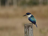 KINGFISHER FOREST_28