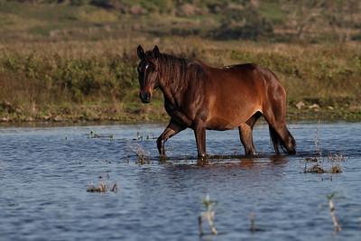 HORSE F_01