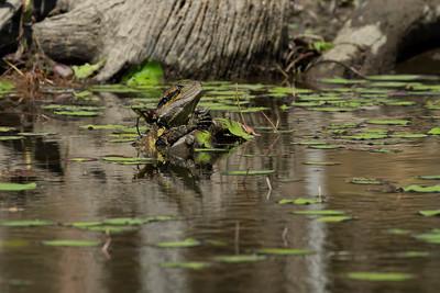 DRAGON EASTERN WATER _10