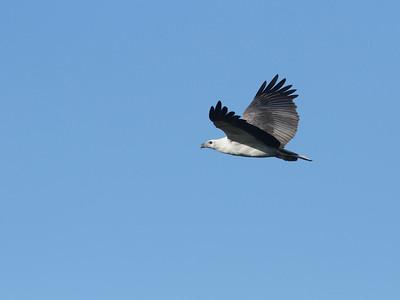 EAGLE W-B SEA_29