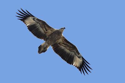 EAGLE W-B SEA J L__06