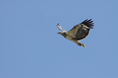 EAGLE W-B SEA  K J_01