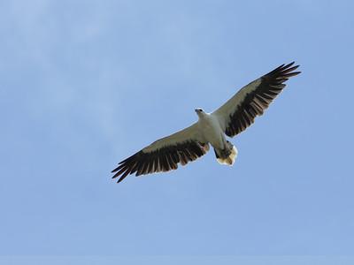 EAGLE W-B SEA_28