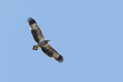EAGLE W-B SEA J_05