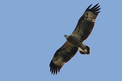 EAGLE W-B SEA J B_02a