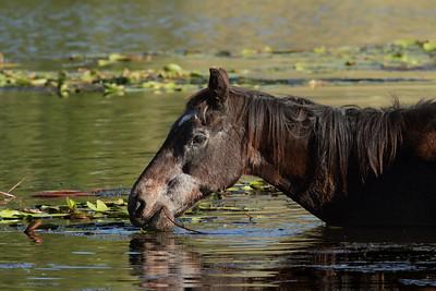HORSE A_05