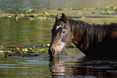 HORSE A_04