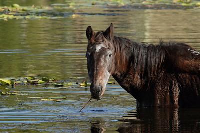 HORSE A_03