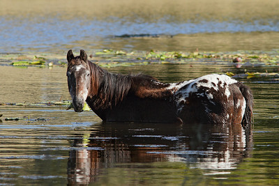 HORSE A_02