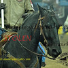 NFR2016-9-039 opening codyCABRAL rickyMORALES horse