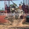 7_13_19_Bar-None Roughstock Rodeo_Bulls-Sec1_Kay Miller (40 of 528)