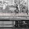 PPCLA PRCA,Rodeo 5 10 19 SteerWrestling-23