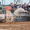 PPCLA PRCA Rodeo 5 9 19 Bulls Sec1-51
