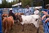ak_rodeo_105